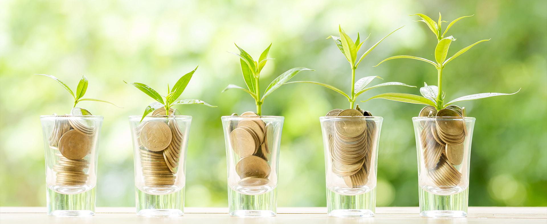 Rosnące rośliny na monetach