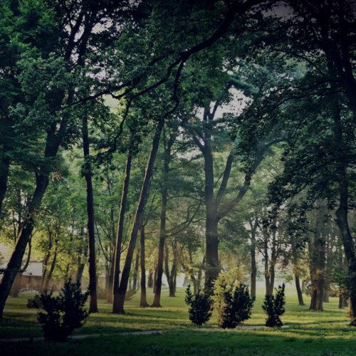 Gmina Gaworzyce park
